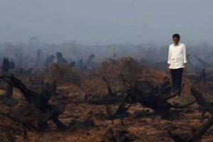 Legislator Riau Minta Jokowi Tangani Hutan Terbakar dan Kabut Asap