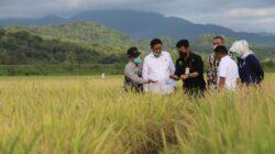 Pemerintah Serap 25 Ribu Ton Gabah Petani untuk Optimalkan Stok Beras