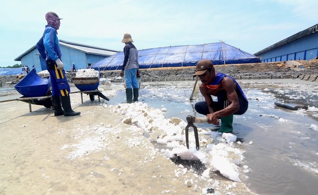 Pemerintah Indonesia Mengimpor Garam