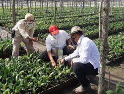 Program Peremajaan Sawit Rakyat PTPN V Capai 9.500 Hektare