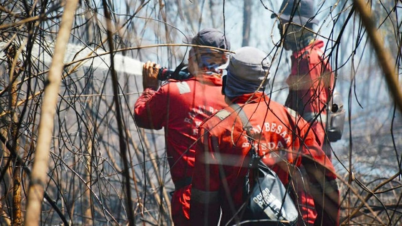 Penyebab Kebakaran Hutan Akibat Ulah Manusia