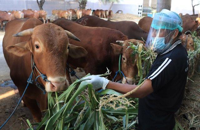 Menag Batasi Penyembelihan Hewan Kurban di Tempat Terbuka